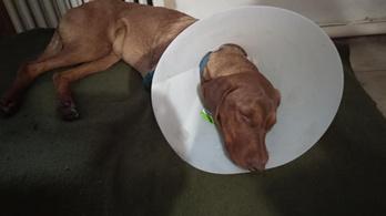 Családi ház udvarán lőttek rá egy 8 hónapos kutyára