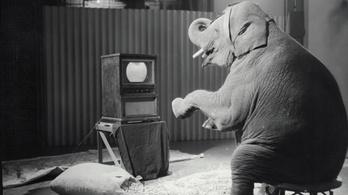 Mi történik, ha egy elefántnak beadunk 30 adag LSD-t?