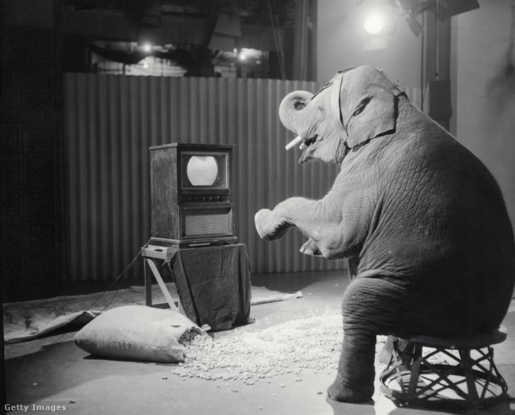 Tusko egy Walt Disney promóciós fotózáson