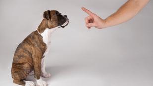 Ennyit ért a kutyád abból, amit mondasz neki