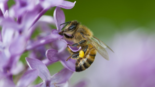 Készíts méhecskehotelt, mentsd meg a méheket!