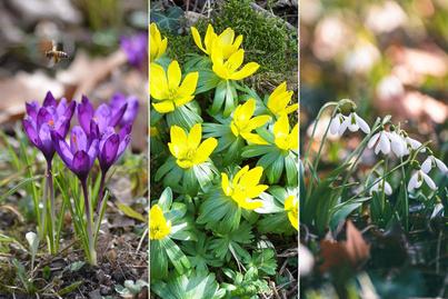tavasz-arborétumok képek