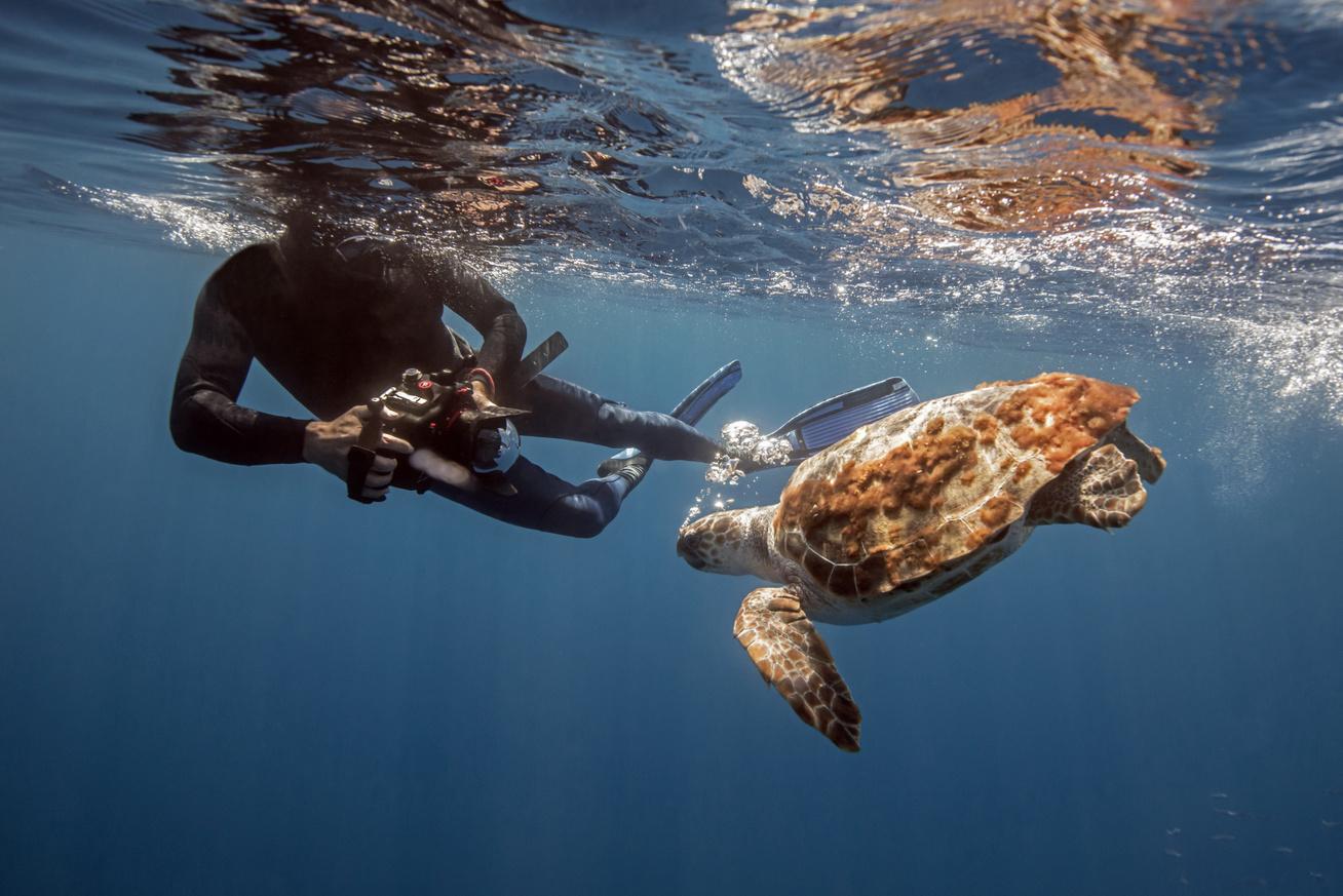 víz alatti fotózás