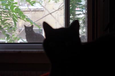 macska nyitó