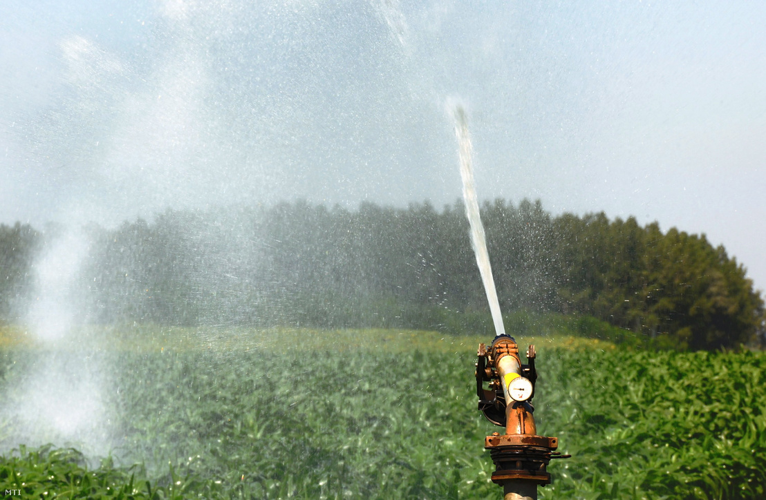 Kukoricaültetvény öntözése