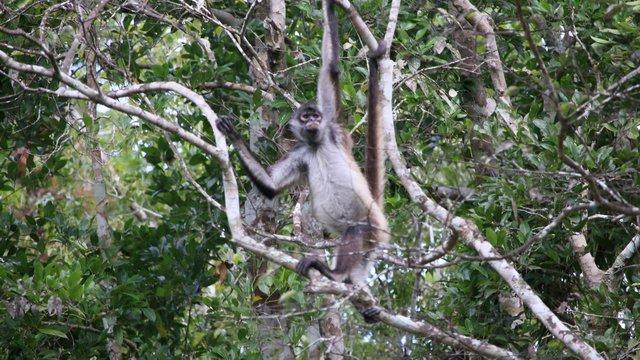 Majmok és denevérek a romok között