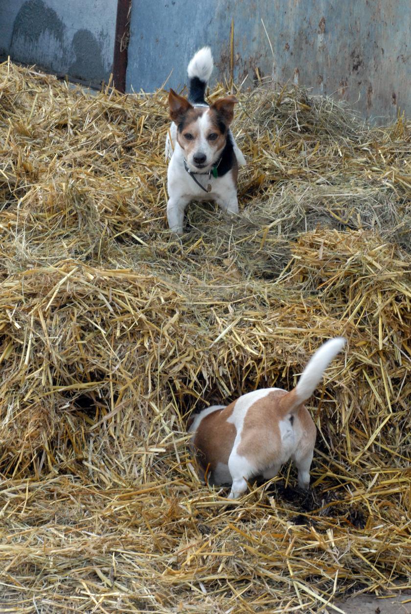vadaszo-kutyak