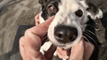 A kutyák orra érzékeli az infravörös sugárzást