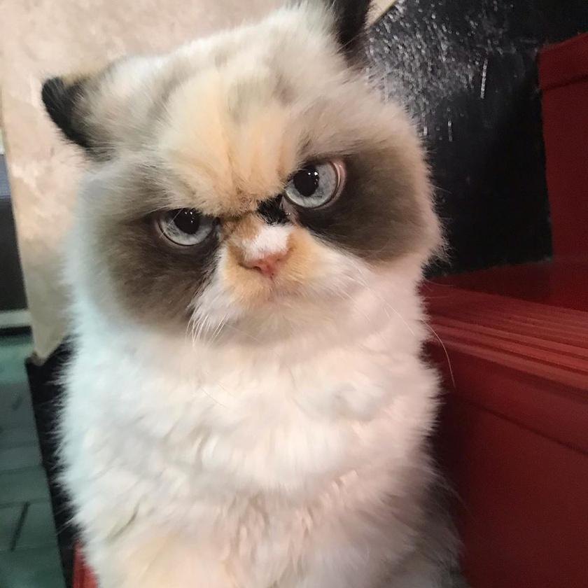 Egy régi állatkereskedésnél talált rá a cicára gazdája, Clare, aki szerint ilyenkor nagyjából tíz hónapos lehetett Meow Meow. Azt nem tudják, az előző gazdája miért hagyta magára.