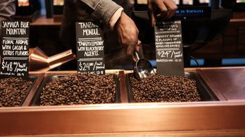 A Starbucks nem vesz többé olyan kávészemeket, amiket gyerekek válogatnak