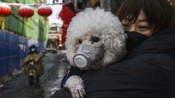A kutya nem lehet koronavírusos, kár rá szájmaszkot húzni