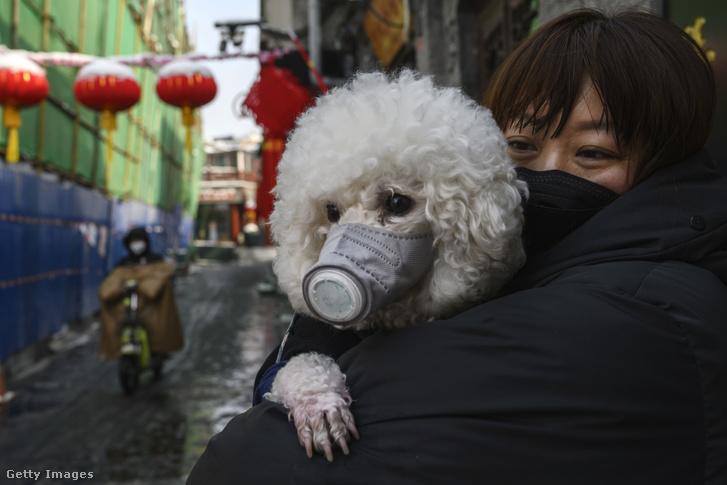 Egy pekingi maszkos kutya maszkos gazdával