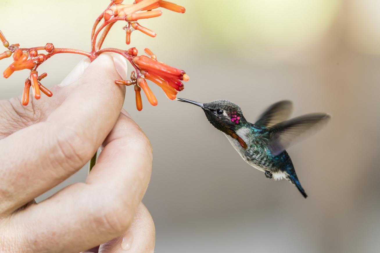 világ legkisebb madara nyitó