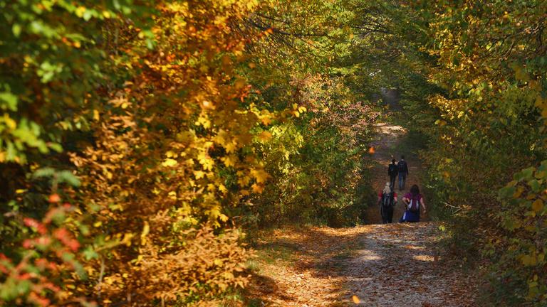 Meddig bírják az erdők a növekvő turistaforgalmat?
