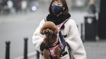 Nincs rá bizonyíték, hogy emberről háziállatra is átterjedhet a koronavírus