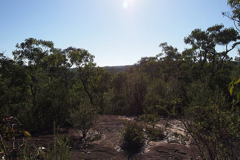 A Godsford glifákat a Sidney-től 60 km-re fekvő Karoing közelében fedezték fel.