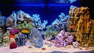 Miért kell szén-dioxid az akváriumba, ha már egyébként is van benne?