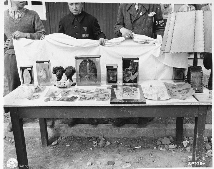 Amerikai felvétel a buchenwaldi patológiai laborban kikészített emberi szervekről, az előtérben tetoválásokat tartalmazó emberi bőrdarabok.