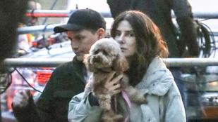 Sandra Bullock filmet forgat, de egy percre sem hajlandó megválni kutyájától