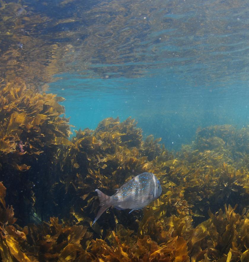 viz-alatti-erdo