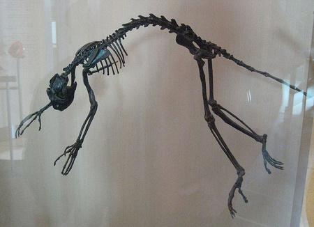 Egy faj az adapidák közül (Forrás: Wikipedia)