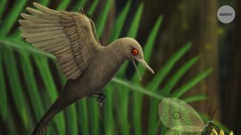 Felfedezték a legkisebb ismert dinoszauruszt