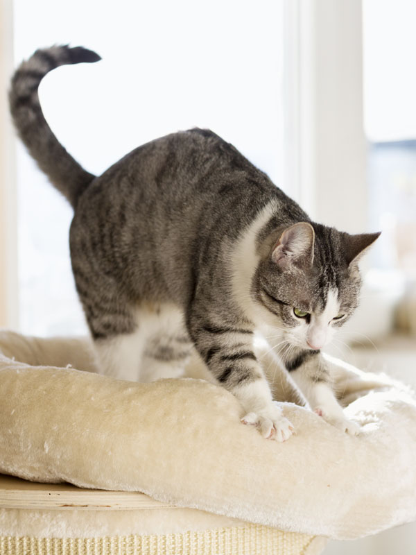 Mit jelent, ha dagaszt a cica?