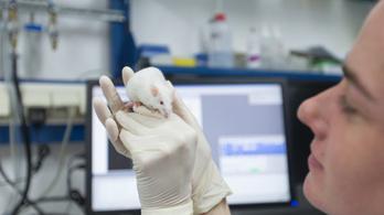 Kísérleti állatokon múlik a koronavírus-vakcina sorsa