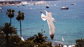Cannes: a szervezők cáfolják, hogy a járvány miatt elmaradna a filmfesztivál