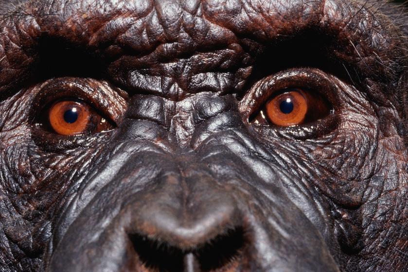 A világ legokosabb állatai, akik az embereken is túltesznek: a memóriától az együttműködésig