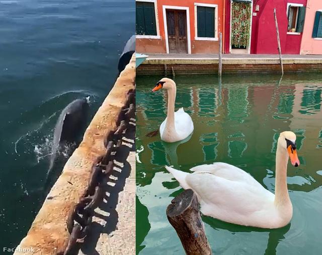 Delfin Cagliariban és hattyú Velencében