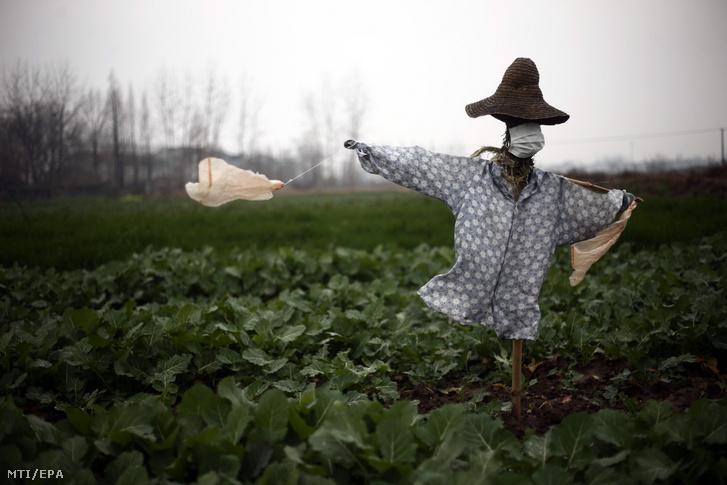 Védőmaszkos madárijesztõ a kínai Hupej tartományban fekvõ Csianli falu határában