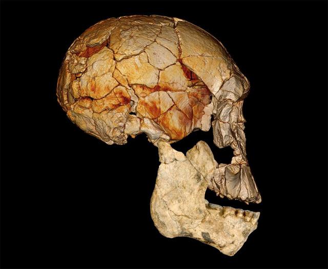 leakey-human-fossils-2
