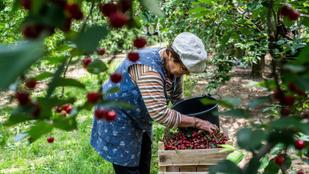 Két fronton szorongatja a járvány a magyar mezőgazdaságot