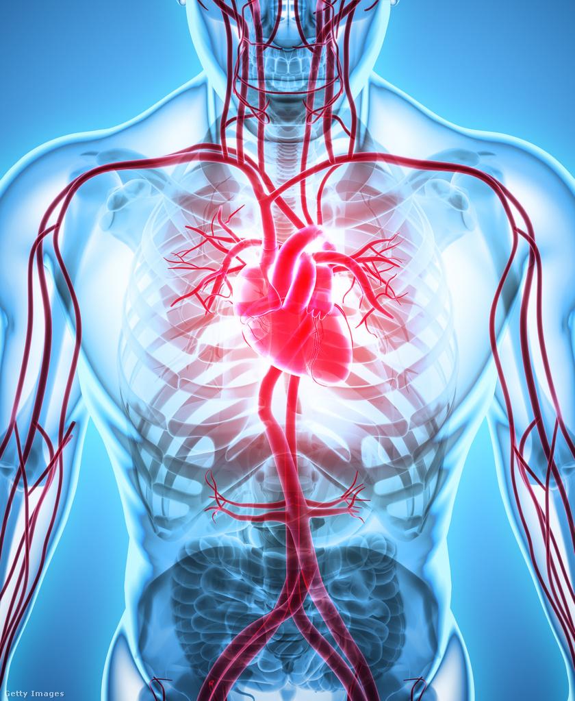 d vitamin kardiovaszkuláris rendszer