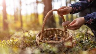Gyűjts ehető növényeket a természetben
