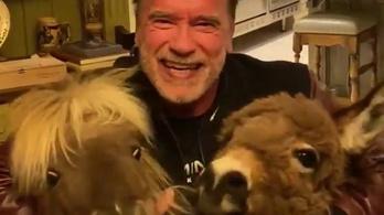 Arnold Schwarzenegger is adakozott egymillió dollárt a koronavírus elleni küzdelemre