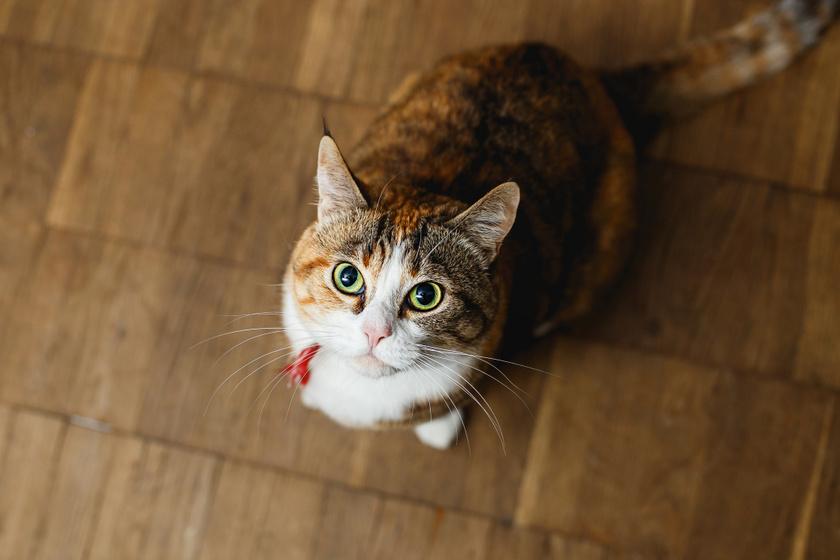 Hogyan taníthatók a macskák? 8 fontos tudnivaló, ha gazdiként elkezdenéd