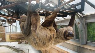 Mutatjuk, mi történik a Fővárosi Állat- és Növénykertben, mióta bezárta kapuit