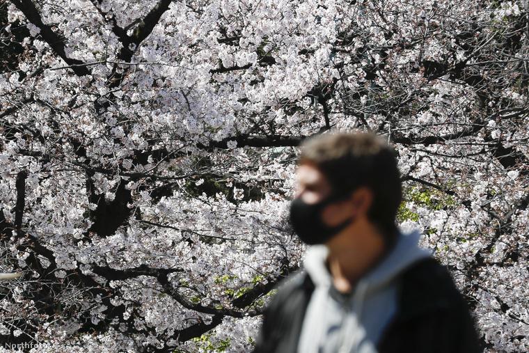 A cseresznyefák virágzásának megünneplésének egy több évszázadra visszatekintő hagyománya van, ez a hanami