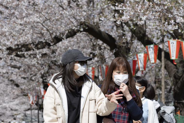 Lehetséges, hogy hallott már a híres japán cseresznyefákról, melyek virágzását hagyományosan megünneplik a szigetország lakói