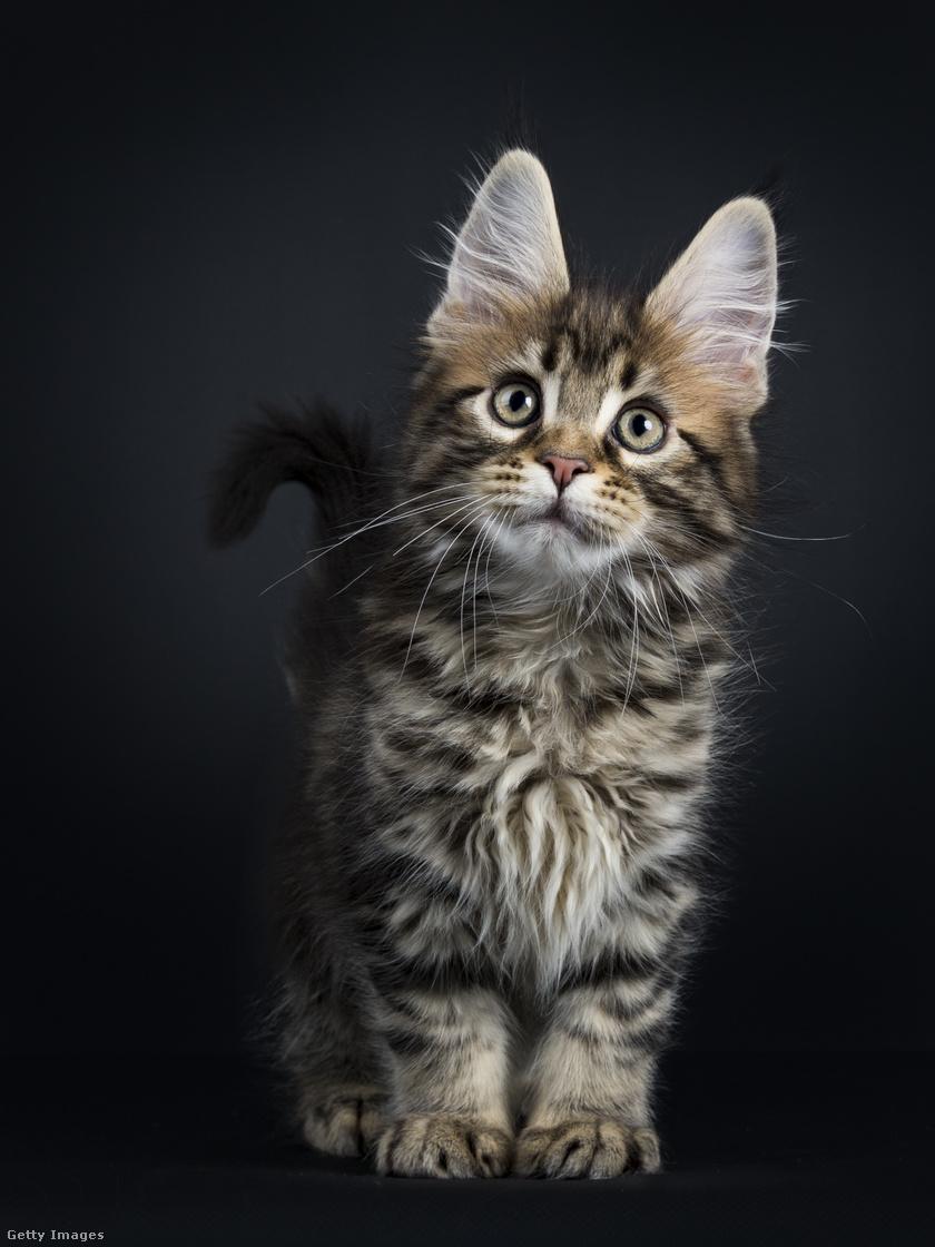 macska-tanitasa