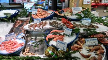 Régebb óta eszik az ember tengeri herkentyűket, mint eddig sejtettük