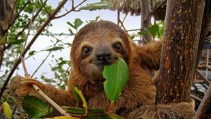14 állat, ami már a járvány előtt kimaxolta a társas távolságtartást