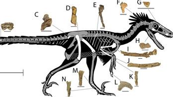 Egy új harcias raptorfaj maradványaira bukkantak Új-Mexikóban