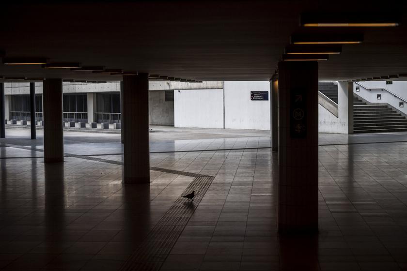 Galamb a Keleti pályaudvar üres aluljárójában 2020. március 28-án, a kijárási korlátozás kezdetének napján.