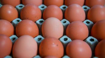 A tojást érdemes hipós vízben áztatni, javasolja az országos tisztifőorvos
