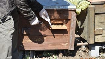 Igazi méhgyűlölőt fogott el a nyíregyházi rendőrség