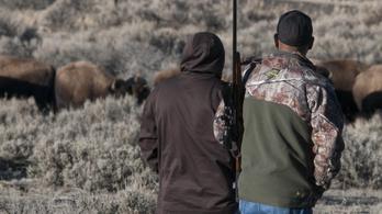 Bölényirtás lesz megint a Yellowstone parkban