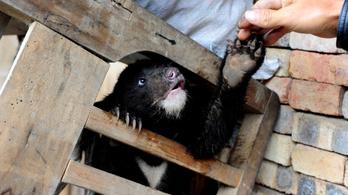 Medveepét is ajánl a kínai kormányzat a koronavírus ellen